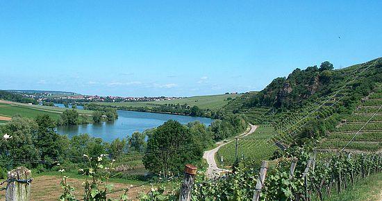 Aussicht auf das Neckartal zwischen Lauffen und Neckarwestheim