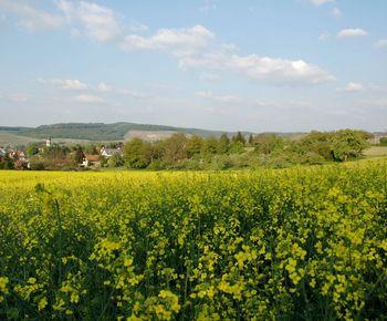 Blühende Felder im Deinenbachtal – Frühlingshafte Radtouren