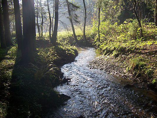 Im Naturpark Schwäbisch-Fränkischer Wald