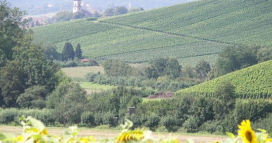 Weinberge im Deinenbachtal