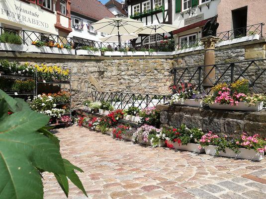 Bad Wimpfen – Brunnen und Gärten