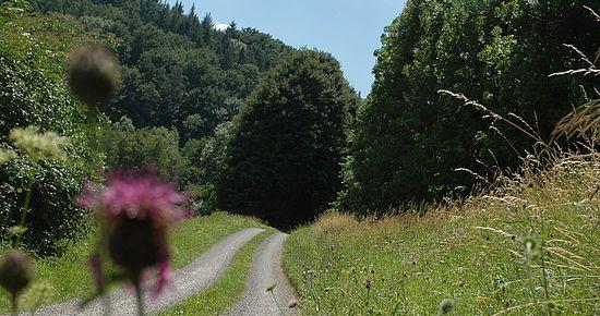 Seitentäler der Jagst - Radweg im Kessachtal